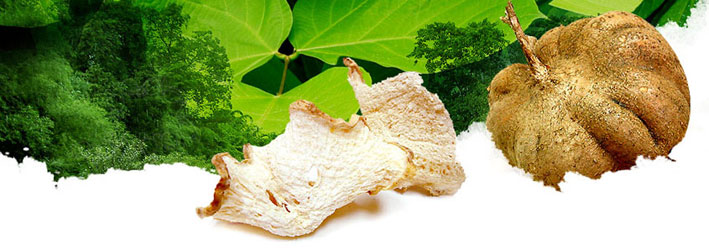 Pueraria mirifica � white kwao krua �  It has been well known to local people for many years due to its distinguished properties and efficacy as well as regarded as the national identity of traditional medicine.